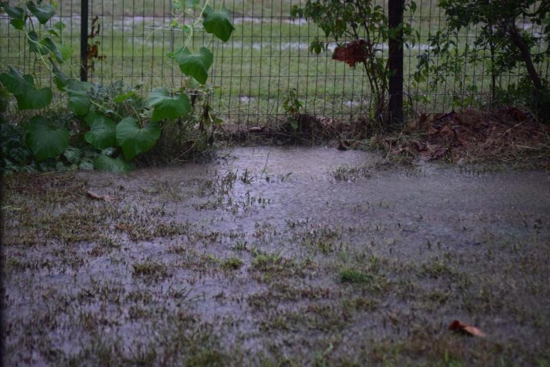 Rain21b