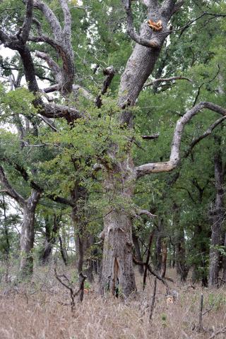 Tree28d
