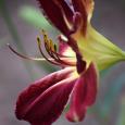 Lily20b