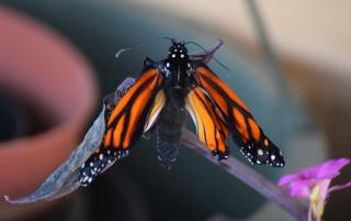 Monarch23b