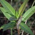 CaterpillarOct3