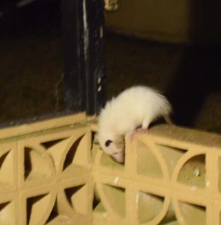 Possums22b