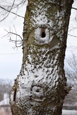 Snowtree19a