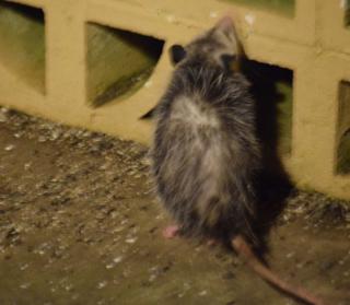 Possums22g