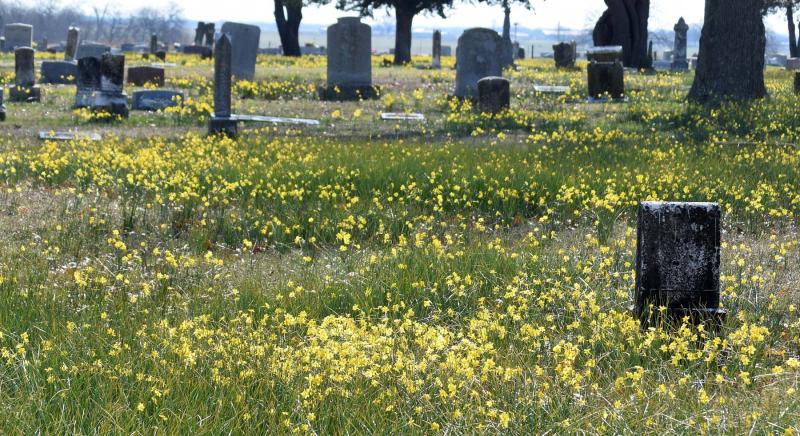 Flowersmarch19a