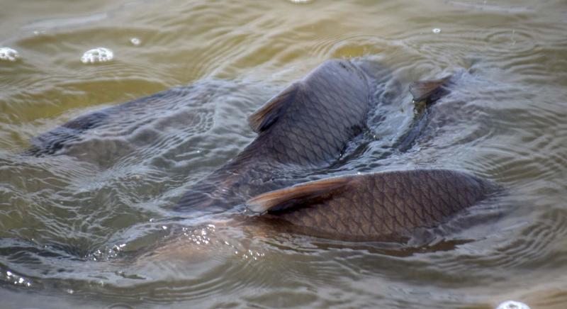 Fishsplash22b