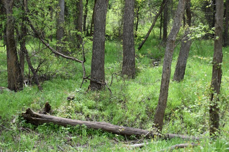 Woodsview