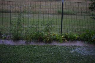 Rain16a