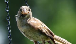 Sparrow3c