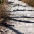 Path25