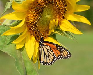 Monarch22_edited-1