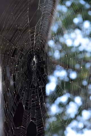 Spiderweb6best