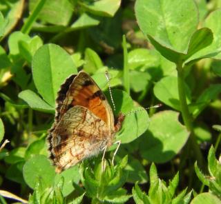 Butterflybest19