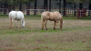 Horses22Mar20d