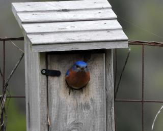 Bluebird23
