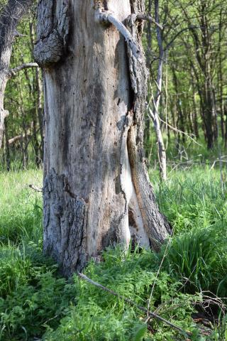 Tree25d