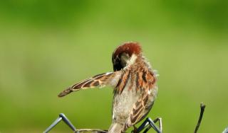 Sparrow18a