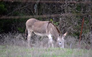 Donkey22Mar20