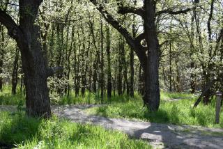 Woods25a