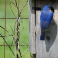 Bluebird29d