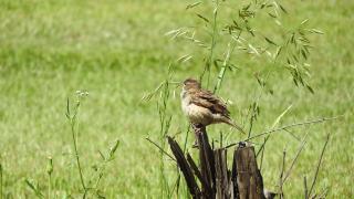 Bird30