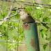 Bird in pipe