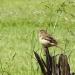 Bird on stump
