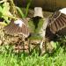 Mockingbird Dance