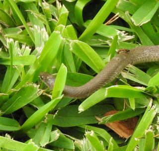 Snake29b
