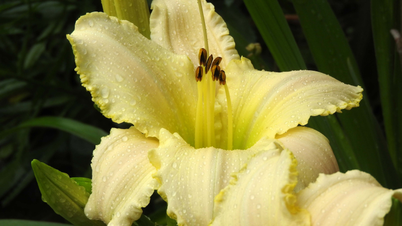 Wetlily23a