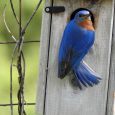 Bluebird3c