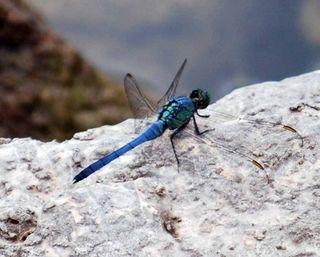Blue dragonrockMay31k