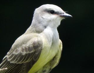 Kingbird3d