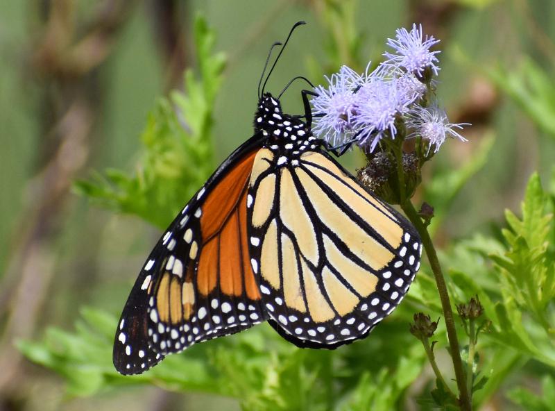 Monarch20e