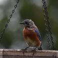 Bluebird27d