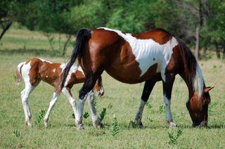 HorsefoalJul2