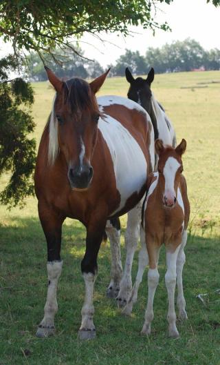 HorsesJul2a