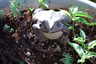 FrogAp27