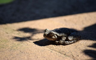 Frog31b