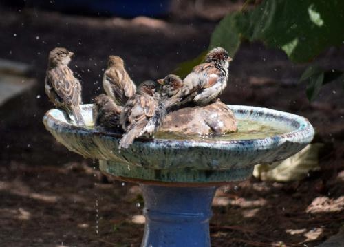 Crowded bath