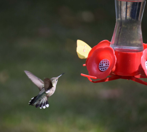 Two at feeder