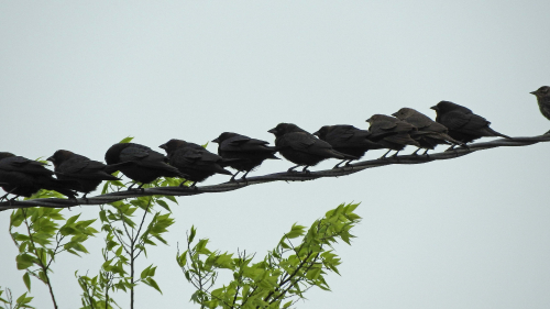 Birds waiting for me to leave the yard