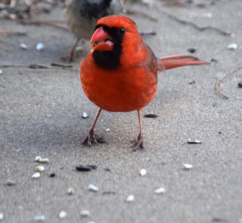Cardinal February2