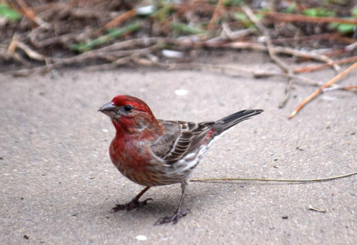 Finch May