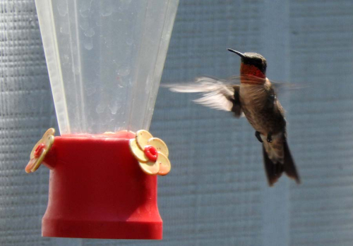 Hummer flight