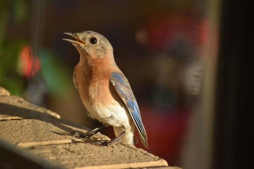 Blue visitor