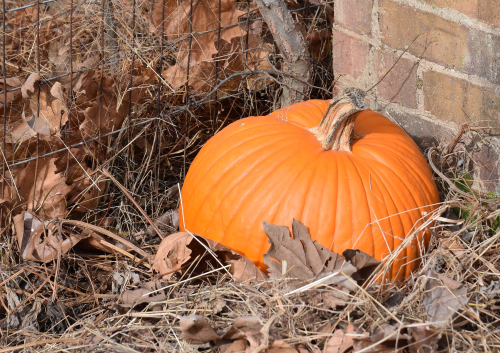 Retired pumpkin