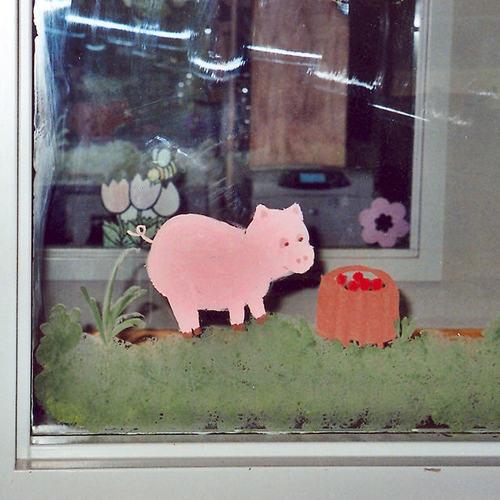 Pig Window